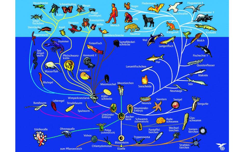 Stammbusch des Tierreiches