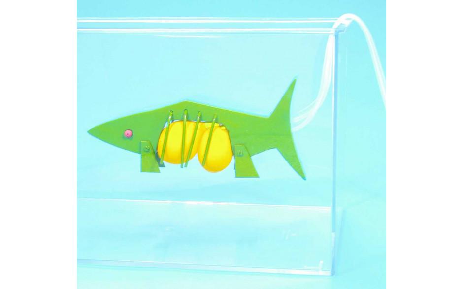Fisch: Funktionsmodell der Schwimmblase